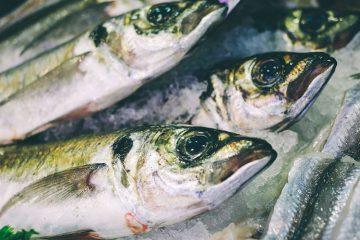 Pesca sostenible. Como comprar pescado de forma artesanal